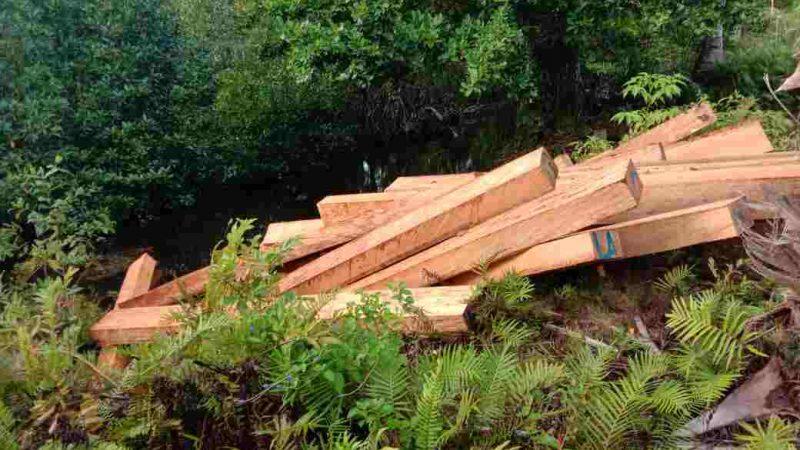 Penebangan Liar Di Obi Utara Halmahera Selatan Picu Bentrok Warga