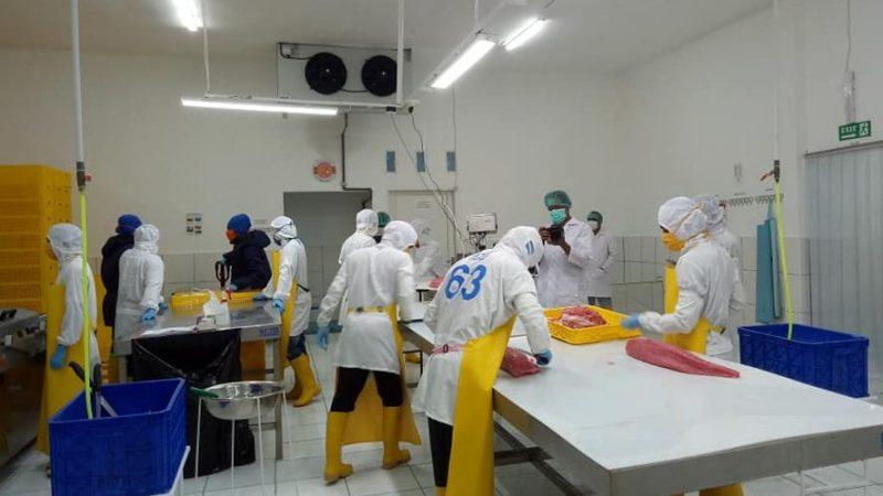 Ekspor Tuna Maluku Utara Menurun